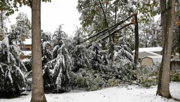 Połamane gałęzie to wynik obfitych opadów mokrego ciężkiego śniegu i silnego wiatru.