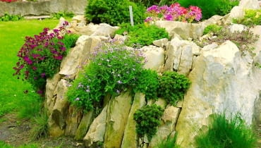 SKALNIAK, ogródek skalny