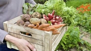 Warzywniak. Przydomowa uprawa pełna zdrowia