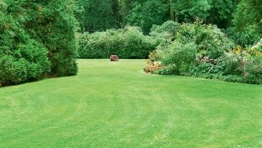 Trawnik bez skazy.