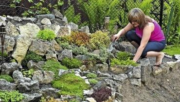 Rośliny skalne o budowie rozetowej i tworzące szerokie kępy można rozmnożyć przez podział. Każda oddzielona część powinna mieć trochę własnych korzeni.