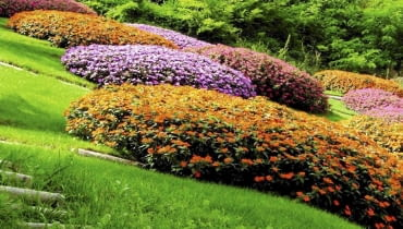 Niecierpki nadają się na kobierce kwiatowe