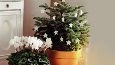 <01AR8KVB - A small christmas tree decorated with white stars