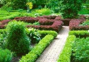 Bukszpan wiecznie zielony (<i>Buxus sempervirens</i>) to klasyczny gatunek do strzyżonych obwódek. Pasuje do założeń formalnych.