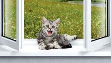 Parapet - miejsce dla kota i paprotki