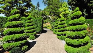 Dekoracyjnie uformowane krzewy to atrakcja wielu historycznych parków.