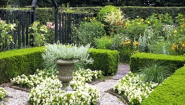 Small garden with Buxus hedges