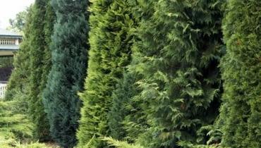 05.07.2006 WARSZAWA , DOBRZYCA K/KOSZALINA, CENTRUM OGRODNICZE HORTULUS