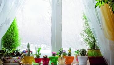Rośliny doniczkowe zimą są szczególnie narażone na choroby.