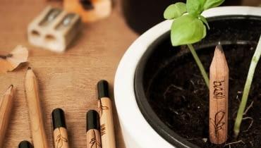 Sprout Pencils, zioła z ołówka
