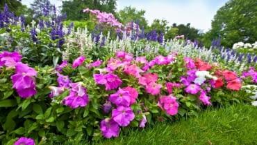 Ogród kwiatowy pełen kolorowych azali