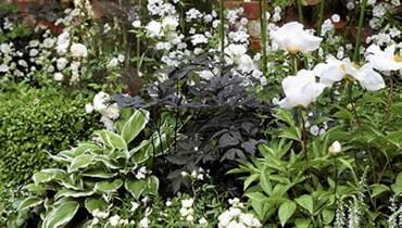 Rabaty z białymi kwiatami są bardzo eleganckie