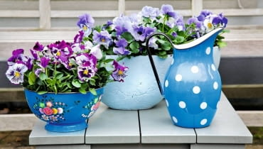 Wzbudzają wyłącznie pozytywne emocje - widok tych uśmiechniętych kwiatków każdemu z nas poprawia humor. A na dodatek kwitną od maja aż do października. Kochajmy więc i sadźmy bratki. <BR />Najlepiej rosną na balkonach wychodzących na wschód, gdzie mają zarówno nieco słońca, jak i względny chłód. <BR /> Wymagają żyznej, dobrze przepuszczalnej gleby. Nie sadźmy ich zbyt głęboko i nie zagęszczajmy nadmiernie - optymalna odległość między roślinami to około 20 cm. <BR /> Najlepszą porą na podlewanie jest poranek. Jeśli o tym zapomnimy i kwiaty zwiędną, po nawodnieniu szybko odżyją. <BR />Gdy bratki zbytnio się wyciągną, przytnijmy je 5 cm nad ziemią, wtedy znów ładnie się rozkrzewią.<BR /> ROŚLINY BALKONOWE. Swojskie klimaty. Bratki znakomicie wyglądają w glinianych donicach, kolorowych misach, a nawet w przerobionych kuchennych naczyniach, np. garnkach i durszlakach.