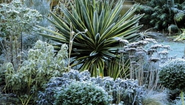 Border in winter with Yucca and Sedum seedheadsSLOWA KLUCZOWE:Backstein Backsteine Beet Bltter Box Buxus Dornen Eis Euphorbia Euphorbie Euphorbien Fette Henne Fetthenne Frost Fruchtstand Fruchtstnde Laub Mauer Perennial Raureif Stachel Standard Staude Strauch Wand Winter Wolfsmilch Yucca Ziegel Ziegelstein Ziegelsteine dornenartig eingefroren eisig frostig gefroren immergrn