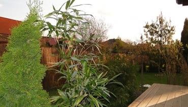 Bambus w ogrodzie
