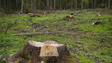 Nowe zasady wycinki drzew