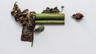 Zielona broń Soni Rentsch