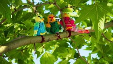 KOLOROWE WŁÓCZKOWE PAPUGI mogą przysiąść na gałęziach drzew również w naszym ogrodzie.