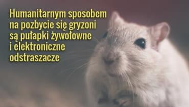Kot to najstarsza i skuteczna metoda na myszy w domu