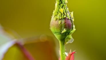 szkodniki roślin