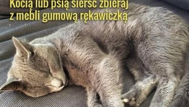 Z kocią i psią sierścią nie zawsze poradzi sobie odkurzacz