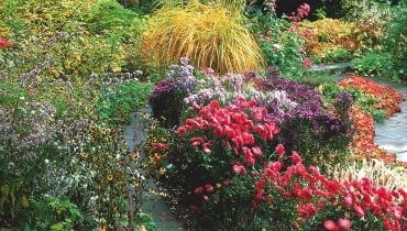 dAutumn border seen through the foliage of Acer japonicum Autumn Glory - Karl Foerster Garden Story