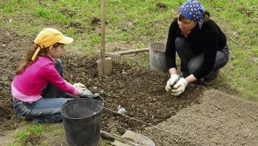 Zakładanie grządek rozpoczynamy gdy ziemia ogrzeje się i obeschnie, czyli gdy już nie klei się do butów. Jak najszybciej wyrównujemy jej powierzchnię, by ograniczyć utratę wilgoci. Następnie rozsypujemy nawozy i kompost,motyczymy, grabimy, rozbijamy duże grudki ziemi i wyznaczamy grządki.