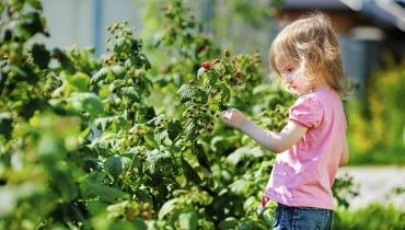 Choroby i szkodniki krzewów owocowych