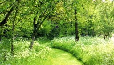 Ścieżki w leśnym ogrodzie. Tam gdzie jest więcej światła, można utrzymywać dziką łąkę, którą ścina się dwa razy w sezonie, strzygąc krótko kosiarką jedynie trakt spacerowy