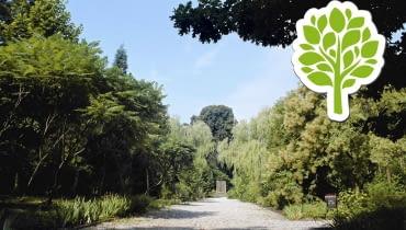 Arboretum Czarnca