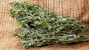Odwar z piołunu możemy przygotować z jego świeżych liści i pędów albo z suszonych.