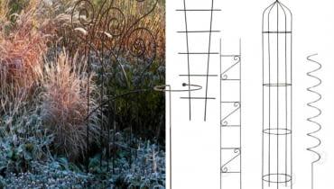 trawy ozdobne,Trawa pampesowa, Rozplenica japońska, Kostrzewa sina