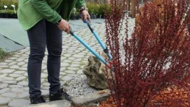 Wiosenne przycinanie krzewów ozdobnych