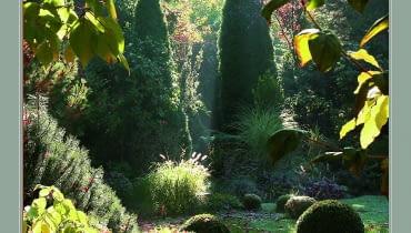 Łagodne światło wydobywa cały urok jesiennego ogrodu.