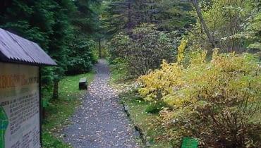 Arboretum w Lądku Zdrój