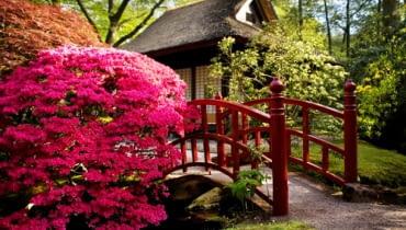 Ogród japoński z mostkiem