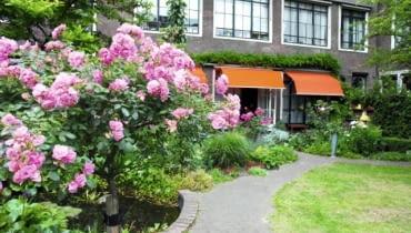 Ogród zdobi kilkanaście różanych krzewów - tu pięknie prowadzone drzewko szczepionej róży burbońskiej