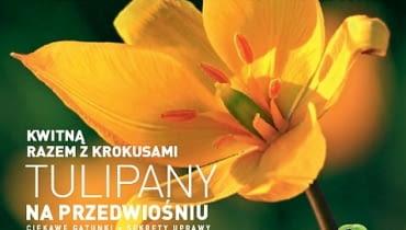 Okładka miesięcznika Kwietnik 02/2012