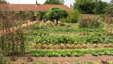 Praktyczne rozplanowanie warzywnika ułatwia pracę. Pamiętajmy o zmianowaniu, to znaczy o tym, by na jednej grządce uprawiać naprzemiennie warzywa z różnych grup, niespokrewnionych ze sobą. Dzięki temu zapobiegamy wyjałowieniu gleby z konkretnych pierwiastków oraz rozprzestrzenianiu się chorób.