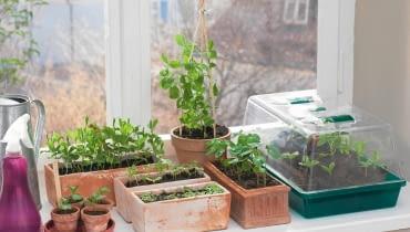 siew roślin balkonowych, rośliny doniczkowe