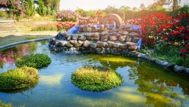 Oczko wodne w ogrodzie krok po kroku