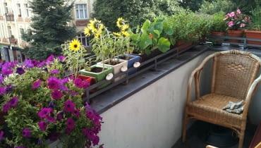 balkon, surfinie, słoneczniki