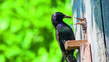 Jeśli chcemy obserwować ptaki na zewnątrz budki, wybierzmy kamerę przemysłową. Najtańsza kosztuje 150-300 zł.