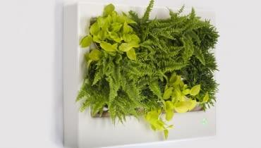 zieleń, rośliny, technologia, ekologia, eko, design