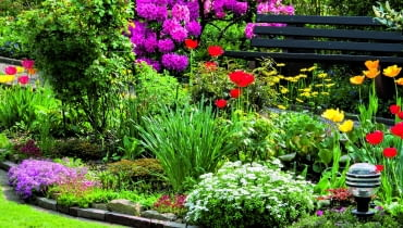 Różanecznik nawet gdy przekwitnie, zdobi ogród pięknymi skórzastymi liśćmi.
