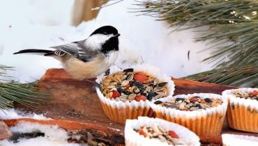 POMYSŁOWE MISECZKI na ptasie przysmaki (mieszankę pestek i ziaren) z papierowych foremek na babeczki.
