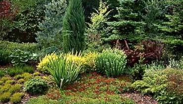 Kompozycja z roślin odpornych na suszę - wrzosów, irysów, goździków, berberysów i jałowców.