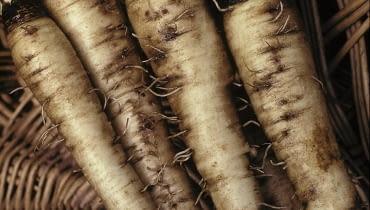 Salsifis 'Mammouth' (Tragopogon porrifolium) SLOWA KLUCZOWE: Asteraceae Flechtkorb Gem´se H´lsenfrucht Korb Pflanze Pflanzen Portrait Stilleben Stillleben Stills Tragopogon porrifolius vertikal