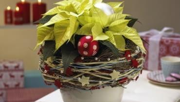 Gwiazda betlejemska. Stroiki bożonarodzeniowe. Roślina w osłonce z kryzą plecioną z gałązek, filcowych sznurków i drucików z koralikami