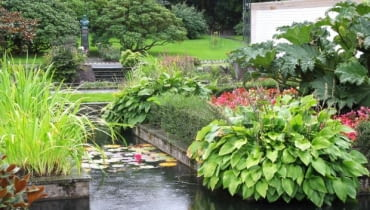 Ogród Muséhagen w Bergen